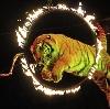 Цирки в Энгельсе