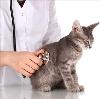 Ветеринарные клиники в Энгельсе